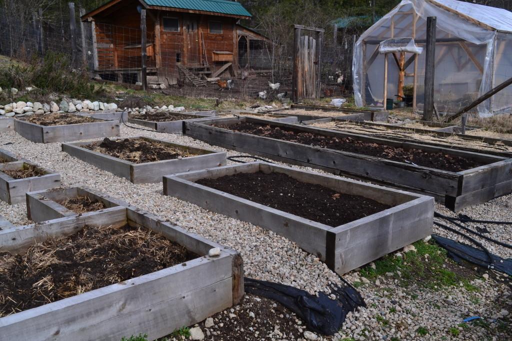 mid-March 2016 - big garden 1