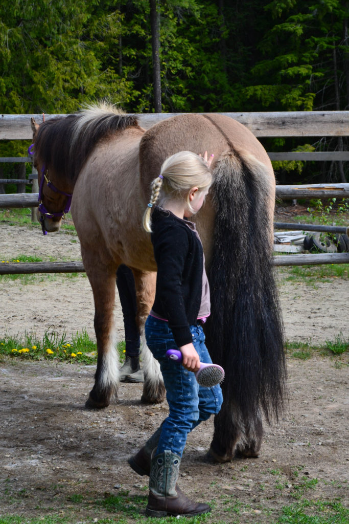 April 2016 - horse lessons 3...