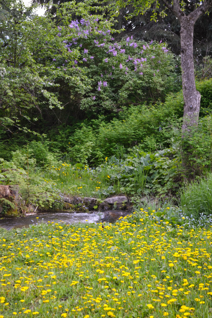 May 4, 2016 - lots of flowers by the waterfall...