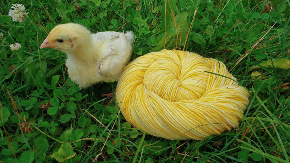 2016 - hatchling - cottage sock - 6...