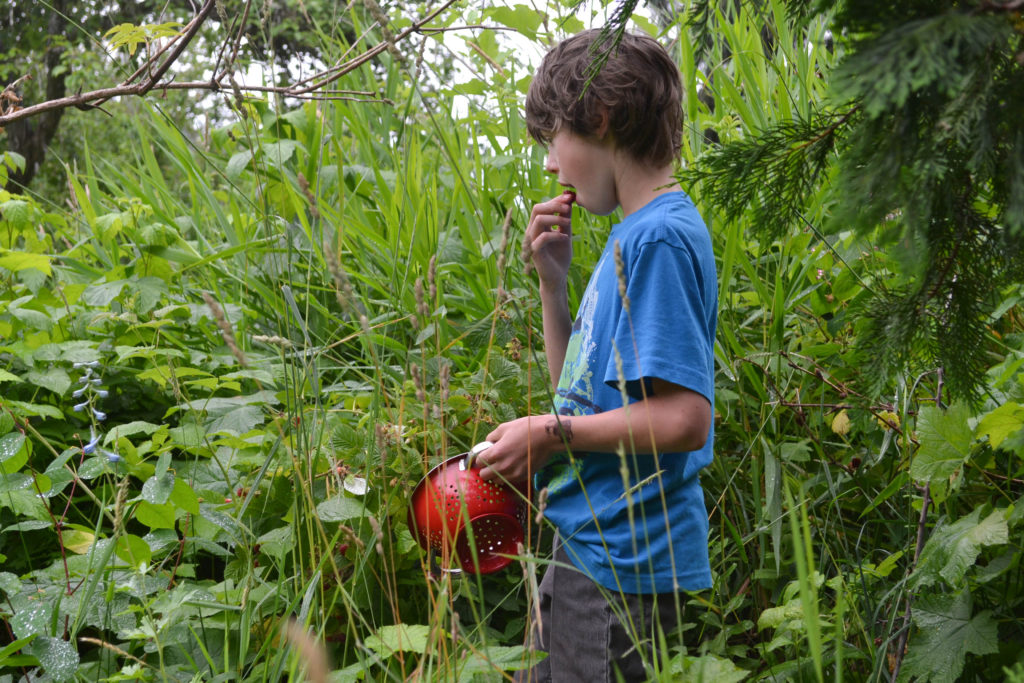 July 2016 - berry harvesting 1...