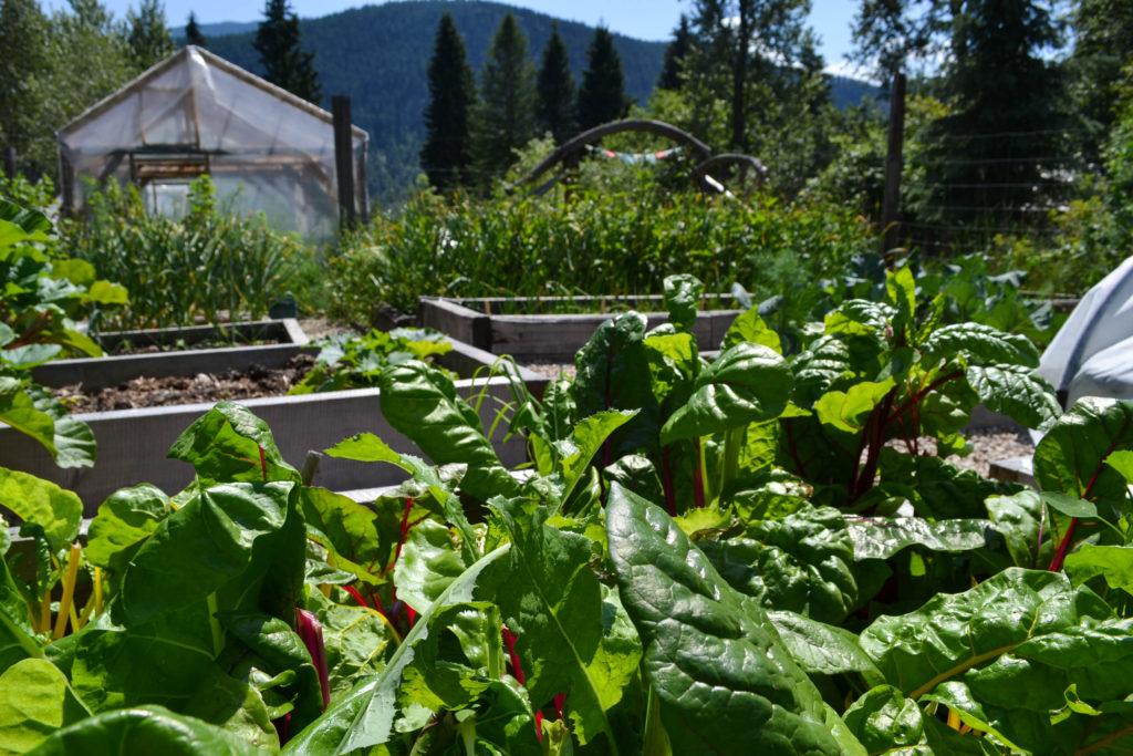 June 30, 2016 - big garden 2...