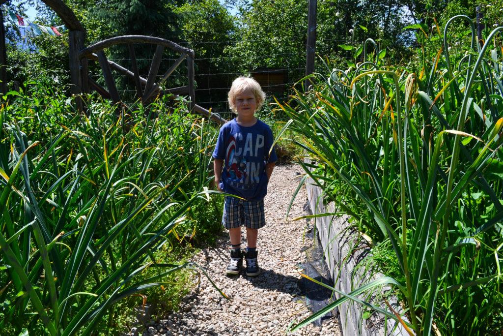 June 30, 2016 - big garden 4...