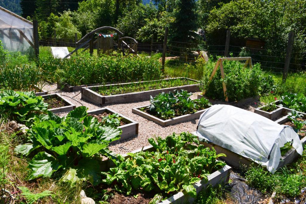 June 30, 2016 - big garden 5...