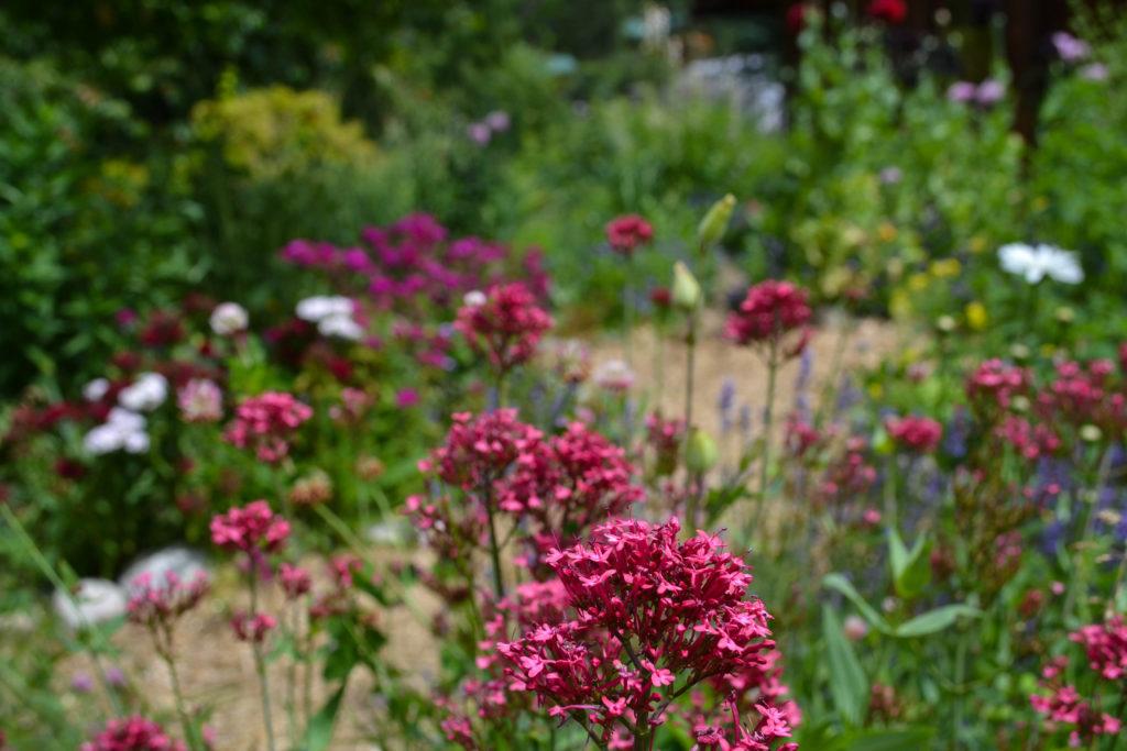 June 30, 2016 - flower garden...