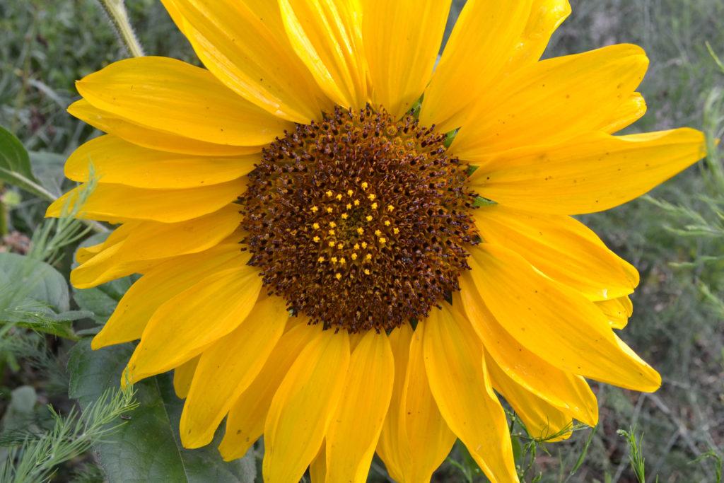 August 2, 2106 - big garden 12...