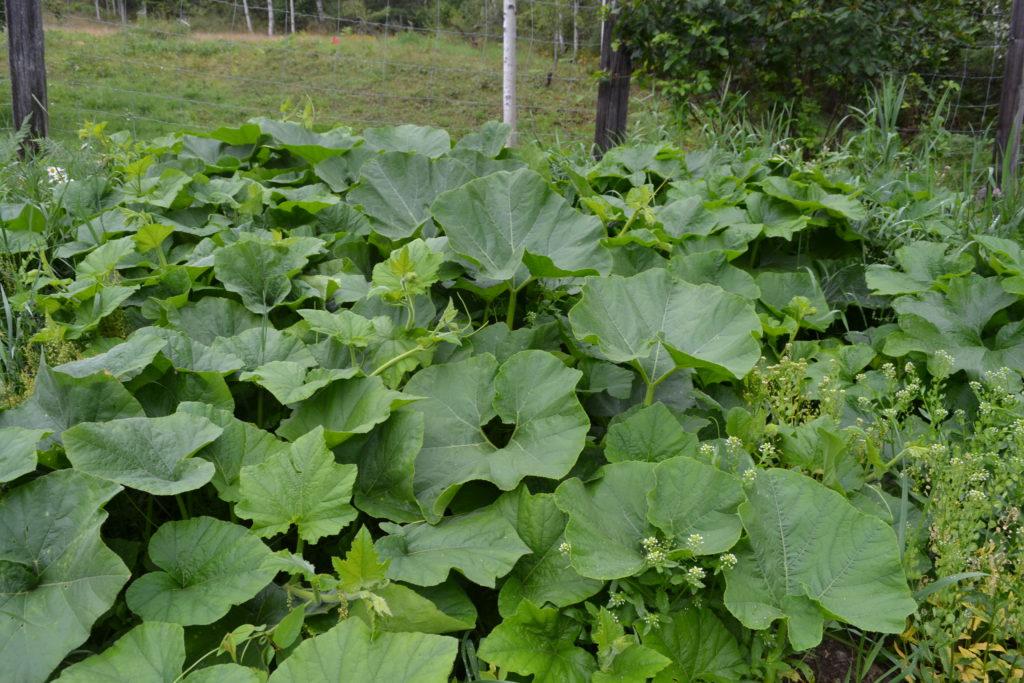 August 2, 2106 - big garden 16