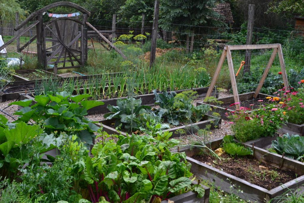 August 2, 2106 - big garden 2