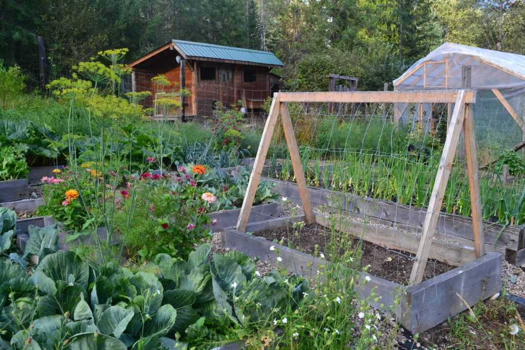 August 2, 2106 - big garden 4