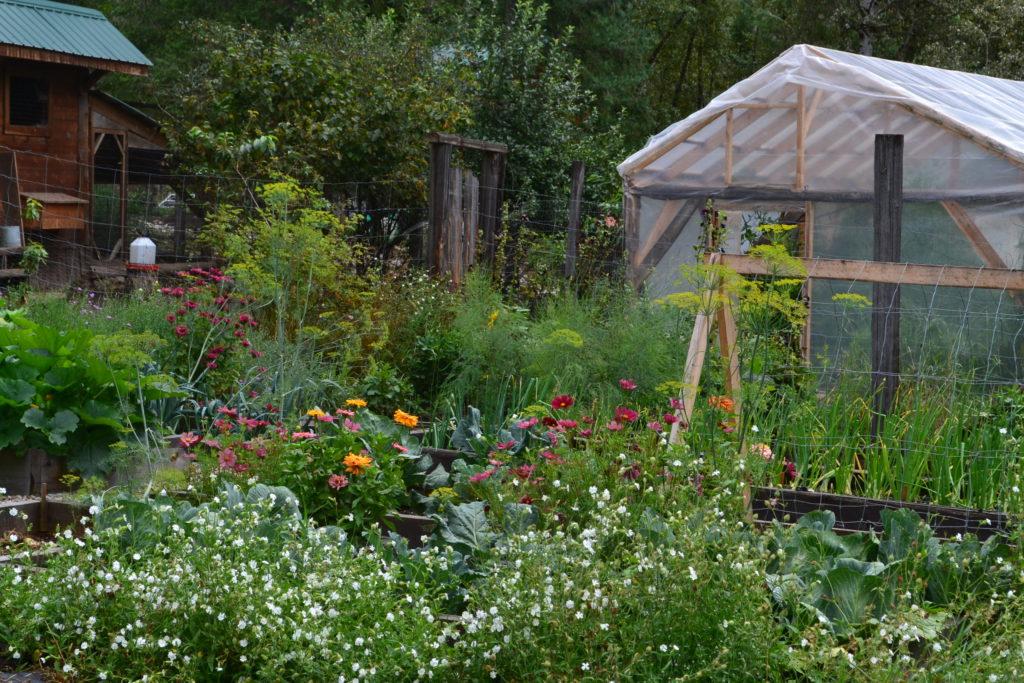 August 2, 2106 - big garden 6