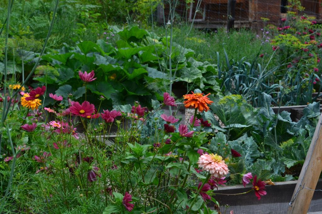 August 2, 2106 - big garden 7