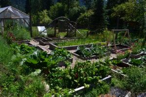 July 21, 2016 - big garden 1