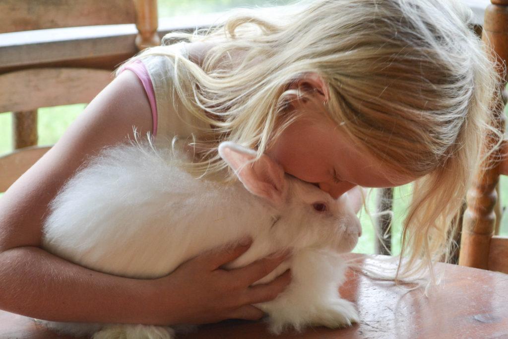 august-2016-angora-bunnies-1