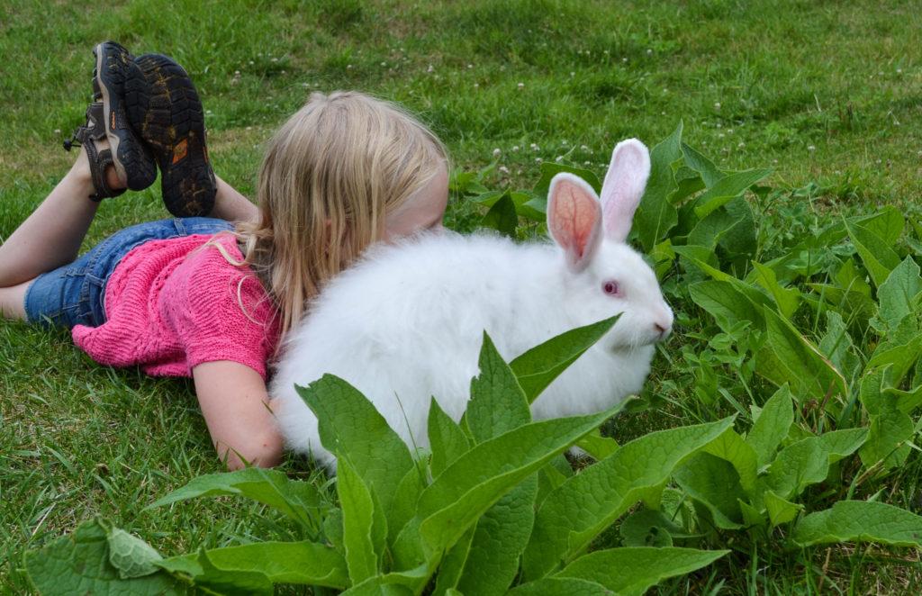 august-2016-angora-bunnies-12
