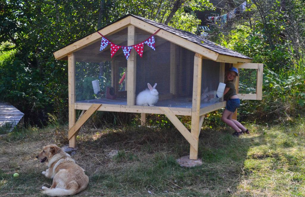 august-2016-angora-bunnies-13
