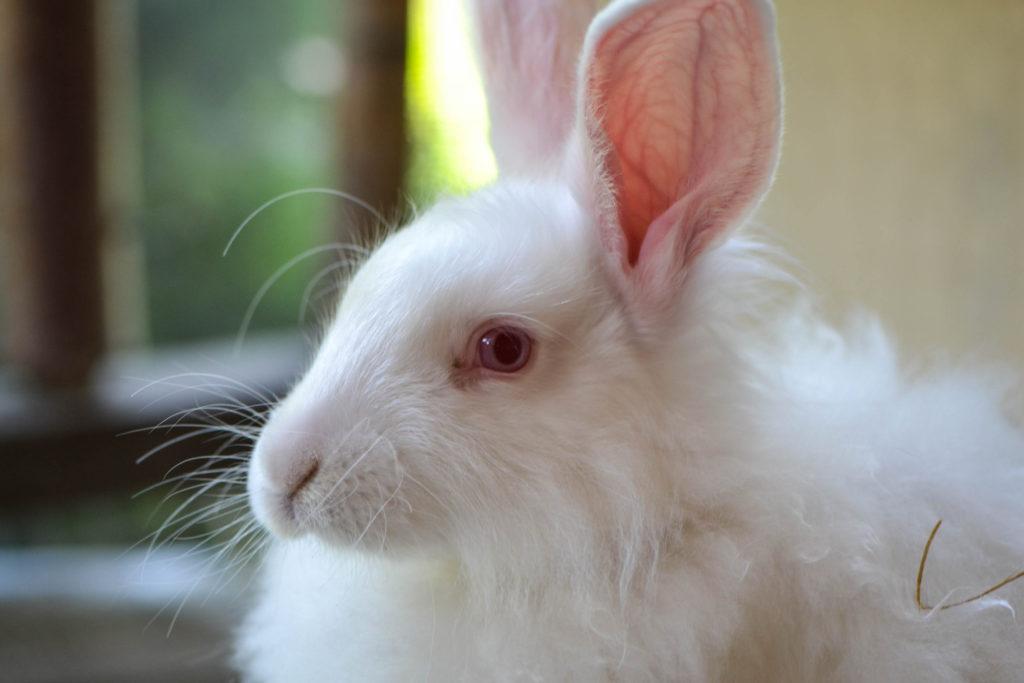 august-2016-angora-bunnies-6