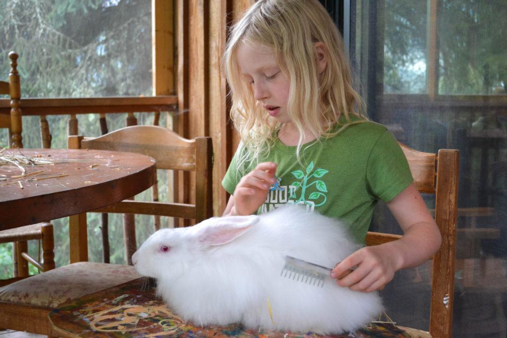 august-2016-angora-bunnies-8