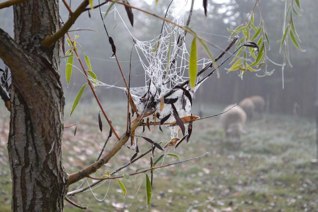 october-2016-frosty-13