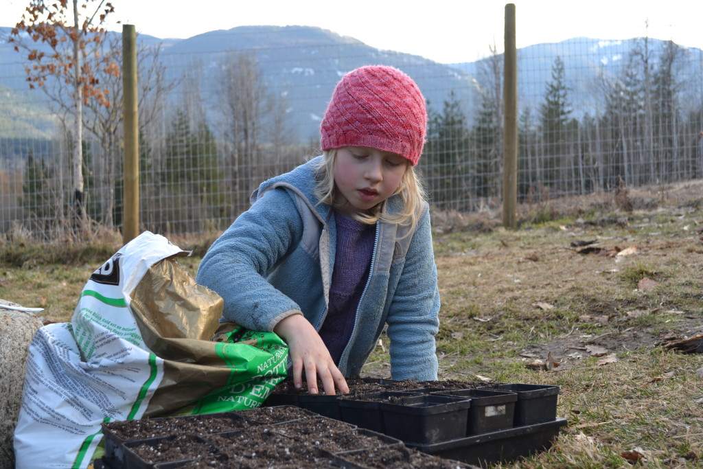 March 6, 2016 - planting tomatoes