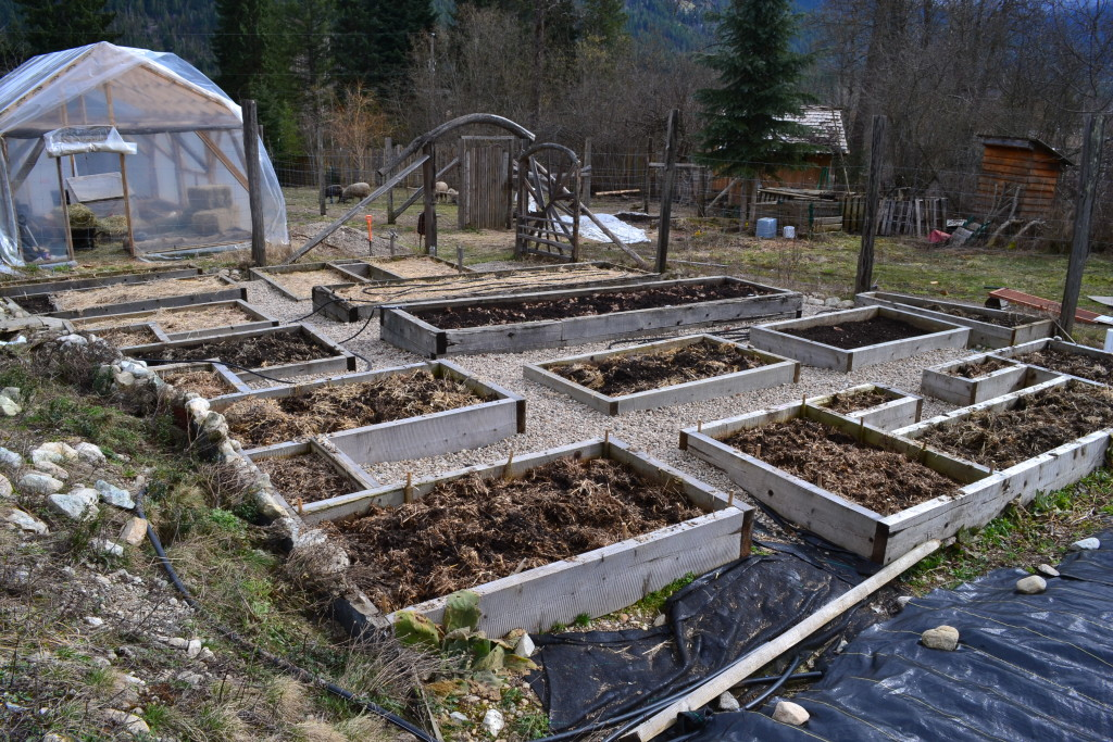 mid-March 2016 - big garden 2