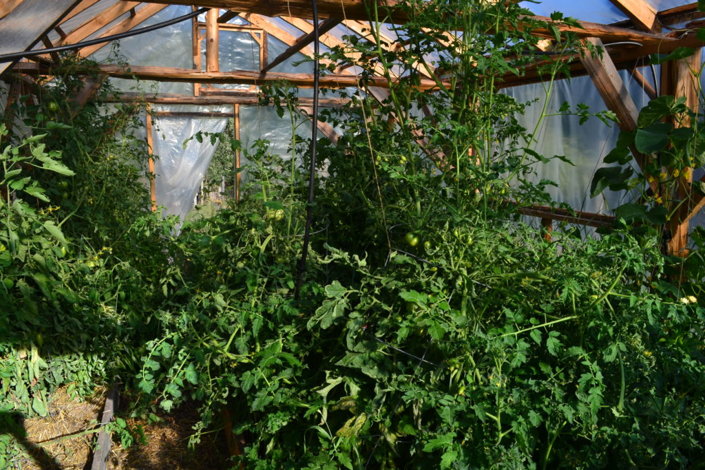 August 2, 2016 - greenhouse